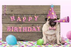 Cucciolo di cane sveglio del carlino con il cappello ed il corno rosa del partito e segno di legno con il buon compleanno del tes Fotografia Stock