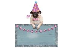 Cucciolo di cane sveglio del carlino con il cappello rosa del partito che appende sul segno di legno blu in bianco con i fiori Immagine Stock