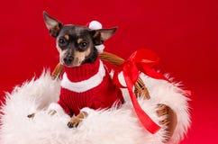 Cucciolo di cane sveglio di Natale Fotografia Stock Libera da Diritti