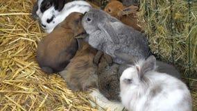 Cucciolo di coniglio nell'azienda agricola archivi video