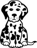 Cucciolo di Dalmation Immagine Stock