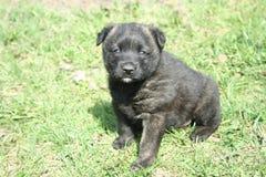 Cucciolo di Hapy sull'erba della molla Immagini Stock Libere da Diritti