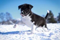 Cucciolo di Holmen Fotografie Stock Libere da Diritti