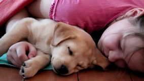 Cucciolo di Labrador che dorme con un bambino stock footage
