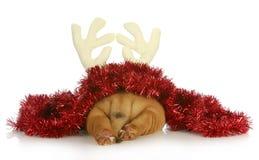 Cucciolo di Natale immagini stock