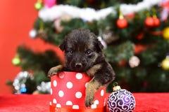 Cucciolo di Santa all'albero di Natale in scatola attuale immagine stock