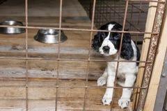 Cucciolo di seduta Fotografia Stock Libera da Diritti