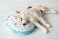 Cucciolo 1 di sonno Fotografie Stock Libere da Diritti