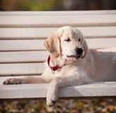Cucciolo divertente Fotografia Stock