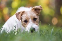 Cucciolo divertente del cane di animale domestico che si siede nell'erba fotografia stock