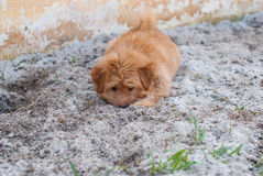 Cucciolo divertente sulla sabbia Fotografia Stock Libera da Diritti