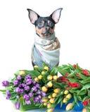 Cucciolo divertente in una sciarpa a colori isolata su bianco Tema di spr Fotografie Stock Libere da Diritti