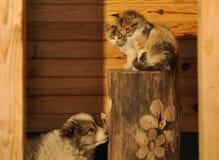 Cucciolo e gattini Fotografia Stock Libera da Diritti