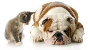 Cucciolo e gattino Immagine Stock