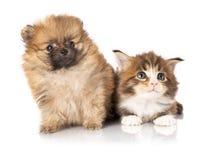 Cucciolo e gattino Fotografia Stock Libera da Diritti