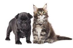 Cucciolo e gattino Fotografia Stock