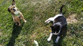 Cucciolo e gatto felici nel campo un giorno soleggiato fotografia stock