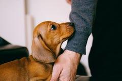 Cucciolo e proprietario fotografia stock
