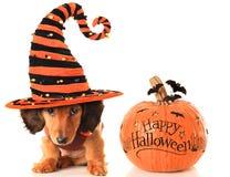Cucciolo e zucca di Halloween Fotografia Stock Libera da Diritti
