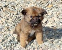 Cucciolo en Bhután Foto de archivo