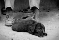 Cucciolo faticoso Fotografia Stock