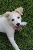 Cucciolo felice Immagini Stock Libere da Diritti