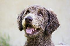 Cucciolo felice Fotografia Stock