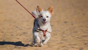 Cucciolo felice dell'animale domestico Immagine Stock Libera da Diritti