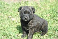 Cucciolo felice sull'erba della molla Immagini Stock Libere da Diritti