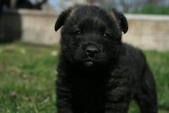 Cucciolo felice sull'erba della molla fotografia stock