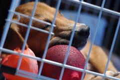 Cucciolo in gabbia Fotografie Stock