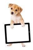 Cucciolo giallo che porta il computer in bianco della compressa Fotografie Stock Libere da Diritti
