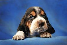 Cucciolo grazioso con i baffi latte-macchiati Fotografia Stock