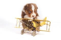 Cucciolo il suo aeroplano Fotografia Stock Libera da Diritti