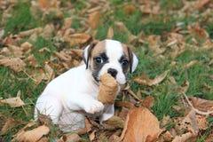 Cucciolo inglese miniatura del bulldog Immagini Stock Libere da Diritti