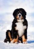Cucciolo lanuginoso che si siede in inverno Fotografie Stock Libere da Diritti