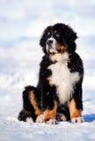 Cucciolo lanuginoso che si siede in inverno Fotografia Stock