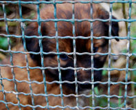 Cucciolo messo in gabbia Fotografia Stock