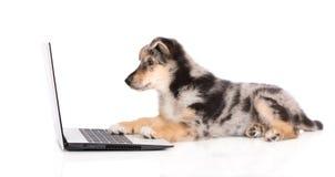 Cucciolo misto adorabile della razza che lavora ad un computer portatile Immagine Stock Libera da Diritti
