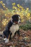 Cucciolo nel giardino Fotografie Stock