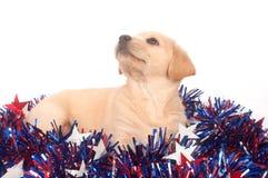 Cucciolo nel quarto delle decorazioni di luglio Fotografie Stock Libere da Diritti