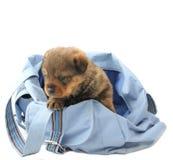 Cucciolo nel sacchetto Fotografia Stock