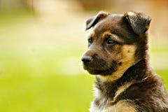 Cucciolo nell'erba Fotografia Stock