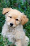 Cucciolo nell'iarda fotografia stock