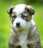Cucciolo nell'iarda Immagine Stock