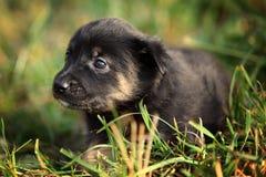 Cucciolo nell'iarda fotografia stock libera da diritti