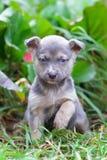 Cucciolo nell'iarda fotografie stock