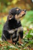 Cucciolo nell'iarda fotografie stock libere da diritti