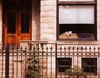 Cucciolo nella finestra fotografia stock libera da diritti