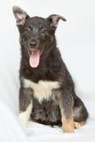 Cucciolo nero che si siede sul fondo bianco fotografie stock libere da diritti
